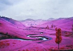 Oltre il reportage. Scatti in rosa di Richard Mosse