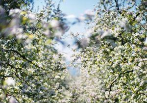 La tendenza: fotografie e un profumo