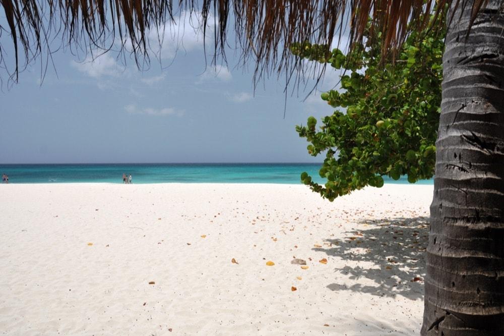 eagle beach isola di aruba