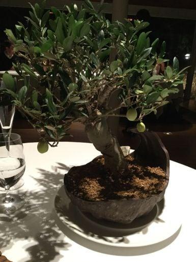 El-Celler-de-Can-Roca-bonsai-olive