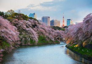 Giappone, i luoghi più belli per celebrare la fioritura dei ciliegi