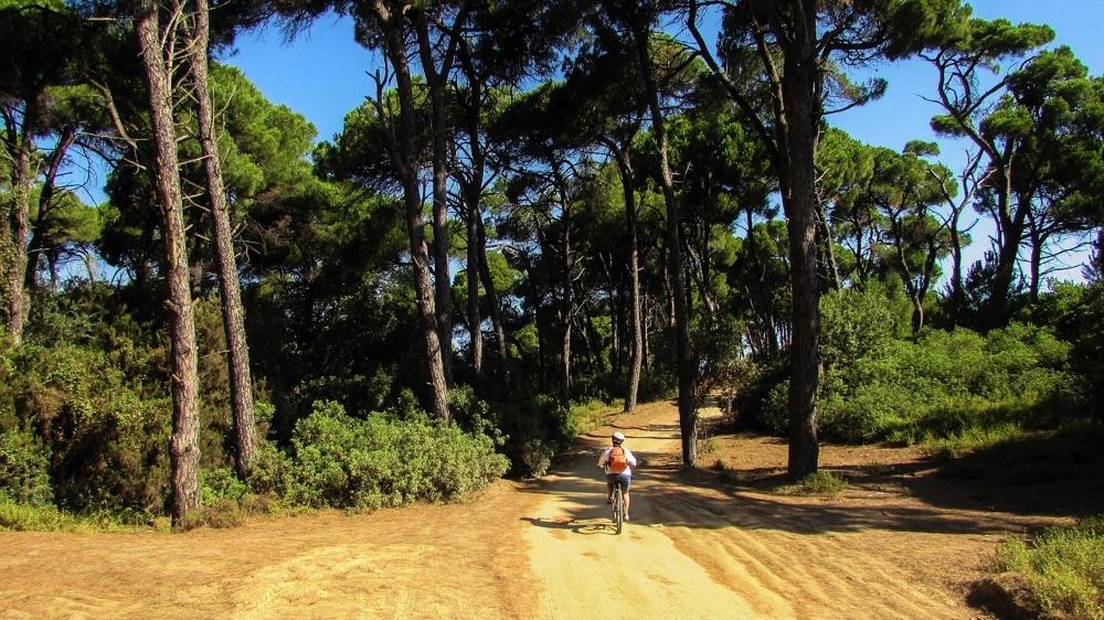 Mandraki foresta