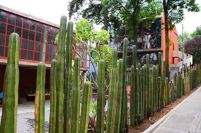 La recinzione fatta di cactus