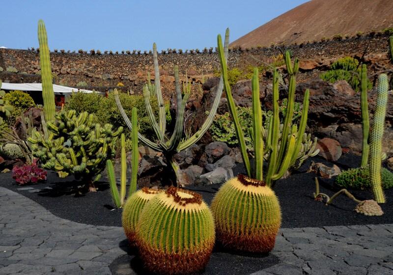 Jardin de Cactus, veduta