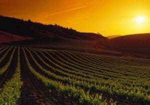 California, alla scoperta della Napa Valley