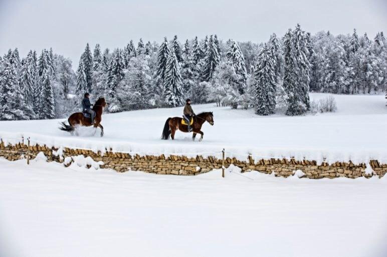 3 Cavalli