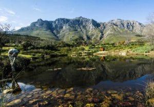 Winelands e Sud Africa: 10 mete di lusso fra vini d'autore, arte e design