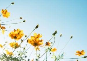 Profumi uomo: le note floreali per anticipare la primavera