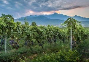 Oltre lo Chardonnay e il Pinot Nero: i migliori spumanti italiani
