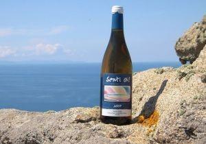 Un sorso di mare: i vini delle isole minori