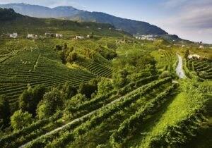 Tra le colline del Prosecco, dove nascono le bollicine più famose del mondo