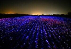 In Olanda con la danza delle luci