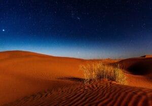 Desert Therapy, in silenzio tra le dune di sabbia